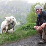 Karl Fostvedt Norwegian Sheep